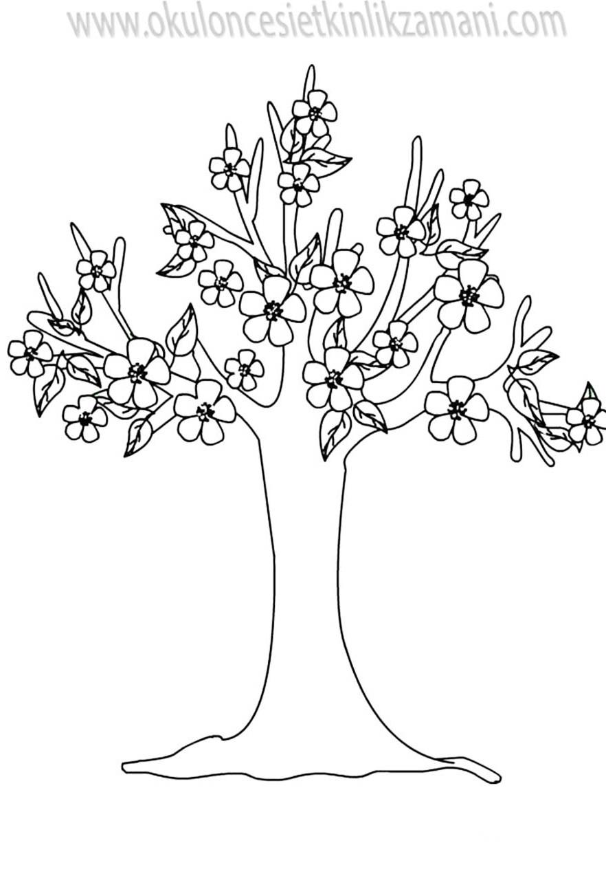 Ilkbahar Yeşeren Ağaçlar Okul öncesi Etkinlik Zamanı